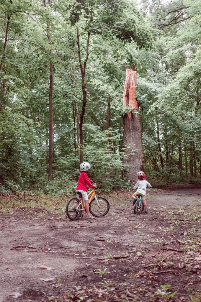Woom Bikes | Kids in the forest on their bikes looking at a broken tree.