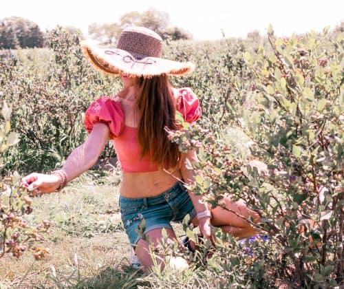 Marina picking blueberries in an orchard.